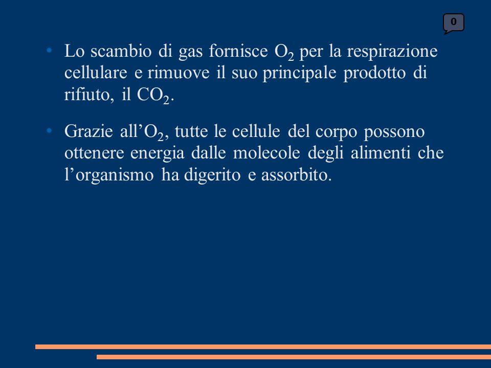 Lo scambio di gas fornisce O 2 per la respirazione cellulare e rimuove il suo principale prodotto di rifiuto, il CO 2.
