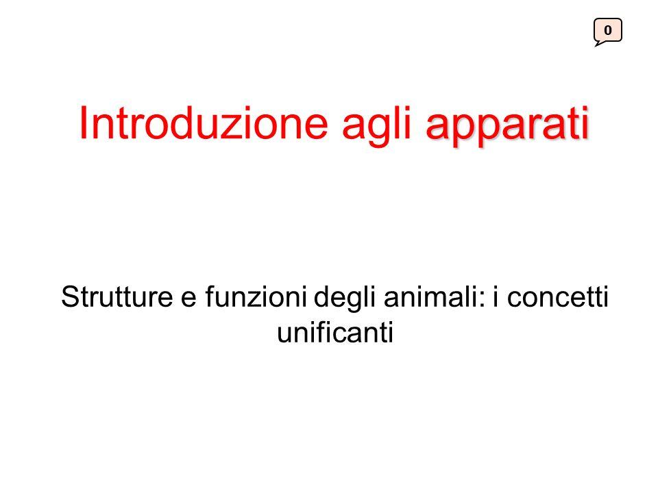 apparati Introduzione agli apparati Strutture e funzioni degli animali: i concetti unificanti 0