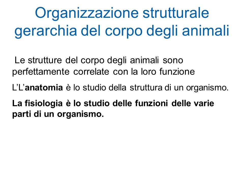 Organizzazione strutturale gerarchia del corpo degli animali Le strutture del corpo degli animali sono perfettamente correlate con la loro funzione LLanatomia è lo studio della struttura di un organismo.