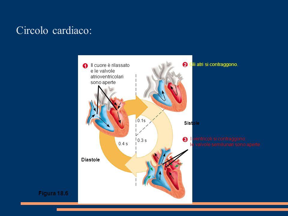 Circolo cardiaco: Figura 18.6 Il cuore è rilassato e le valvole atrioventricolari sono aperte 1 2 Gli atri si contraggono.