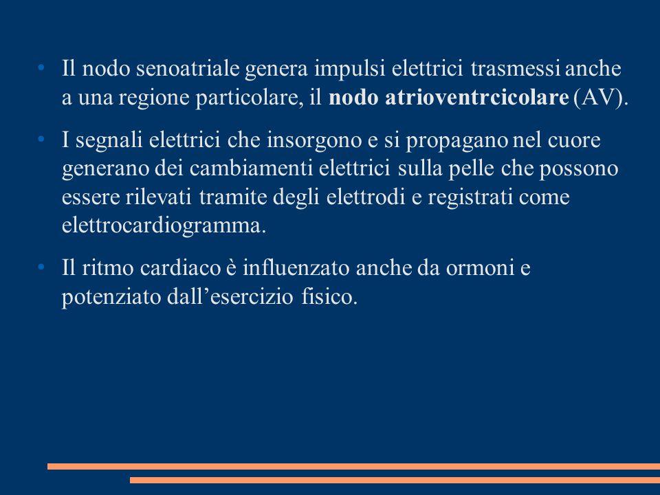 Il nodo senoatriale genera impulsi elettrici trasmessi anche a una regione particolare, il nodo atrioventrcicolare (AV).