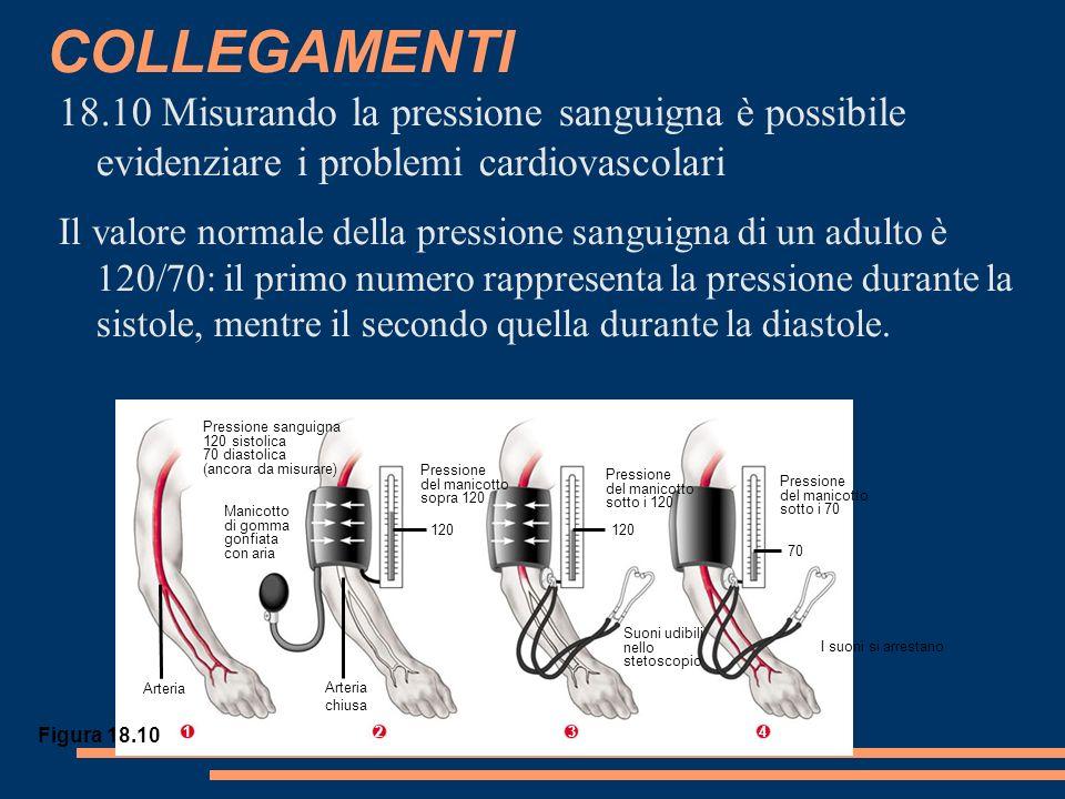 Pressione sanguigna 120 sistolica 70 diastolica (ancora da misurare) Manicotto di gomma gonfiata con aria Arteria Pressione del manicotto sopra 120 120 Pressione del manicotto sotto i 120 120 Pressione del manicotto sotto i 70 70 I suoni si arrestano Suoni udibili nello stetoscopio Arteria chiusa COLLEGAMENTI 18.10 Misurando la pressione sanguigna è possibile evidenziare i problemi cardiovascolari Il valore normale della pressione sanguigna di un adulto è 120/70: il primo numero rappresenta la pressione durante la sistole, mentre il secondo quella durante la diastole.