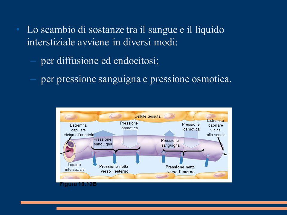 Lo scambio di sostanze tra il sangue e il liquido interstiziale avviene in diversi modi: – per diffusione ed endocitosi; – per pressione sanguigna e pressione osmotica.