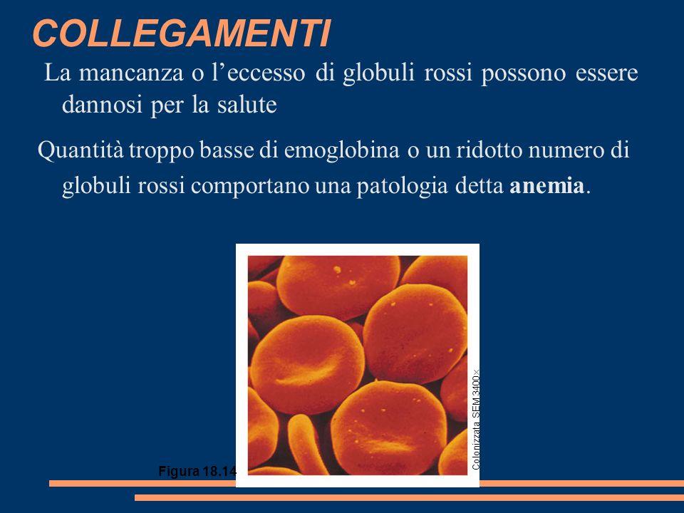 COLLEGAMENTI La mancanza o leccesso di globuli rossi possono essere dannosi per la salute Quantità troppo basse di emoglobina o un ridotto numero di globuli rossi comportano una patologia detta anemia.