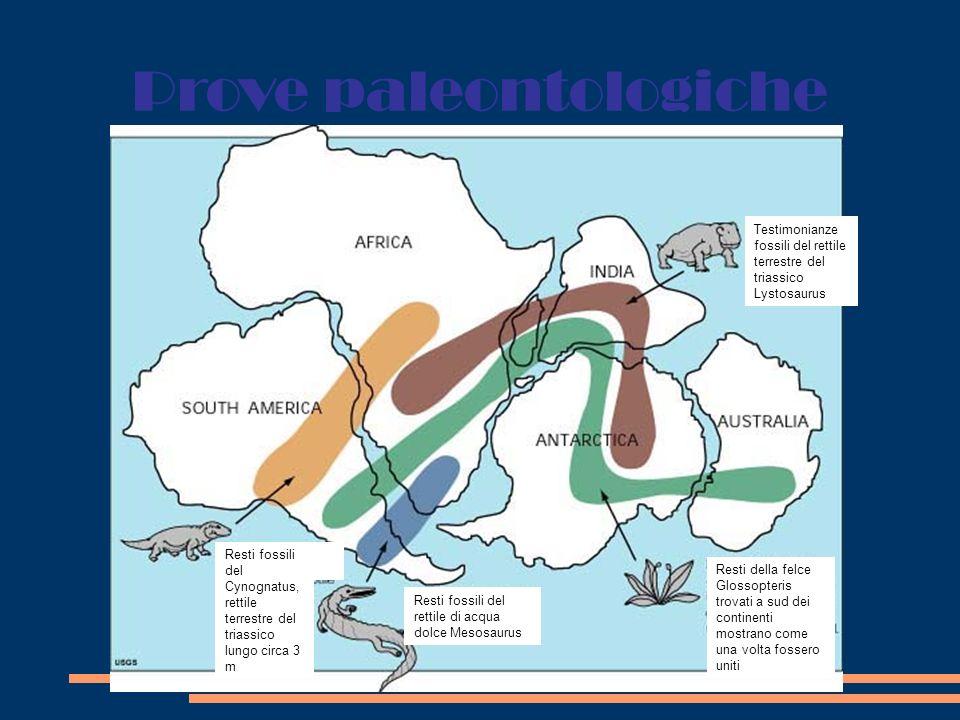 Prove paleoclimatiche Testimonianza delle glaciazioni sono le tilliti, depositi di detriti di roccia trasportati dai ghiacciai Glaciazione permiana