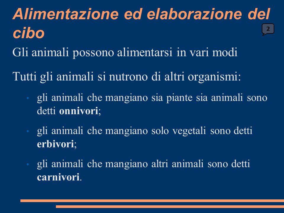 Alimentazione ed elaborazione del cibo Gli animali possono alimentarsi in vari modi Tutti gli animali si nutrono di altri organismi: gli animali che mangiano sia piante sia animali sono detti onnivori; gli animali che mangiano solo vegetali sono detti erbivori; gli animali che mangiano altri animali sono detti carnivori.