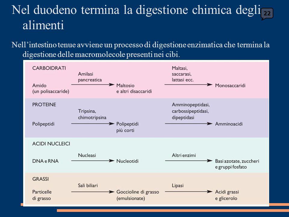 22 Nel duodeno termina la digestione chimica degli alimenti Nellintestino tenue avviene un processo di digestione enzimatica che termina la digestione delle macromolecole presenti nei cibi.