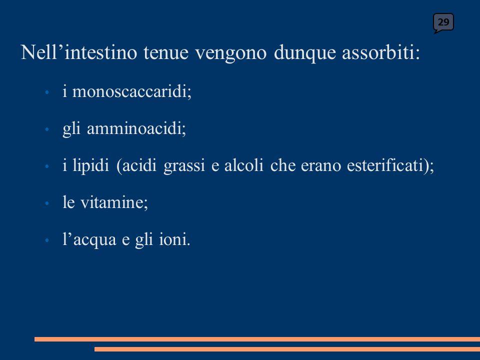 Nellintestino tenue vengono dunque assorbiti: i monoscaccaridi; gli amminoacidi; i lipidi (acidi grassi e alcoli che erano esterificati); le vitamine; lacqua e gli ioni.