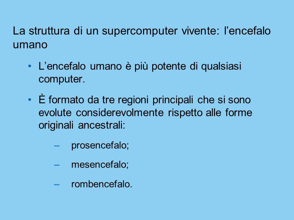 La struttura di un supercomputer vivente: lencefalo umano Lencefalo umano è più potente di qualsiasi computer. È formato da tre regioni principali che