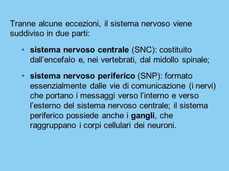 Tranne alcune eccezioni, il sistema nervoso viene suddiviso in due parti: sistema nervoso centrale (SNC): costituito dallencefalo e, nei vertebrati, d