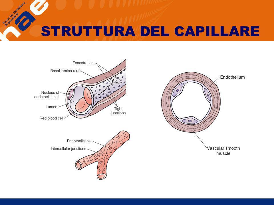 STRUTTURA DEL CAPILLARE