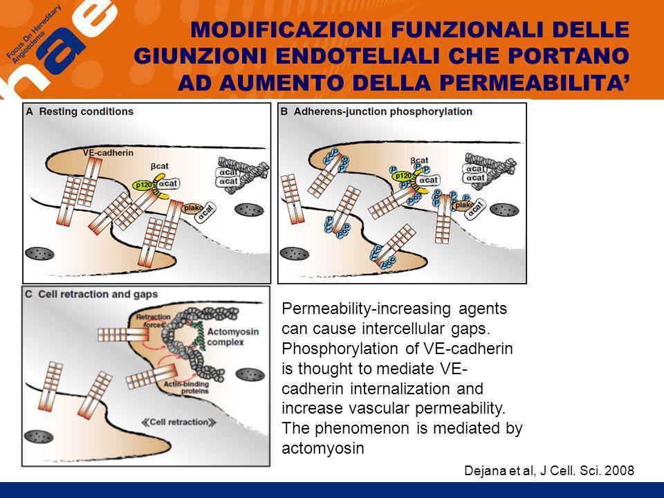 MODIFICAZIONI FUNZIONALI DELLE GIUNZIONI ENDOTELIALI CHE PORTANO AD AUMENTO DELLA PERMEABILITA Permeability-increasing agents can cause intercellular