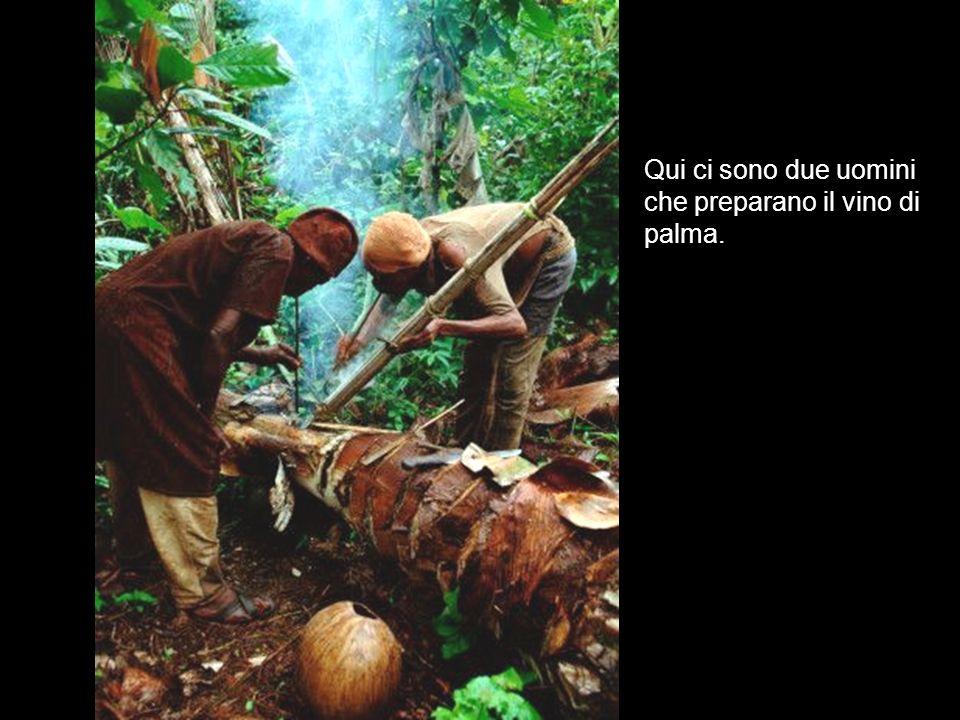 Qui ci sono due uomini che preparano il vino di palma.