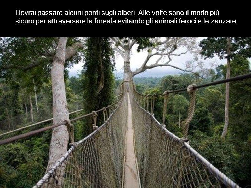 Dovrai passare alcuni ponti sugli alberi. Alle volte sono il modo più sicuro per attraversare la foresta evitando gli animali feroci e le zanzare.