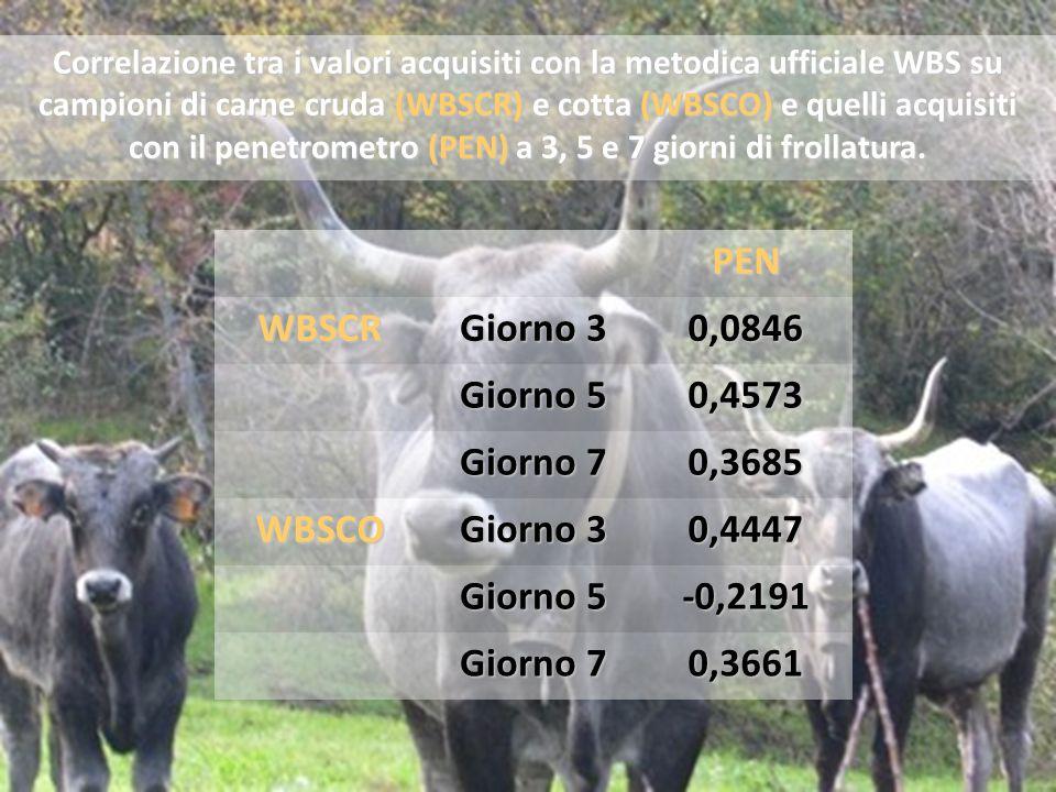 Correlazione tra i valori acquisiti con la metodica ufficiale WBS su campioni di carne cruda (WBSCR) e cotta (WBSCO) e quelli acquisiti con il penetrometro (PEN) a 3, 5 e 7 giorni di frollatura.