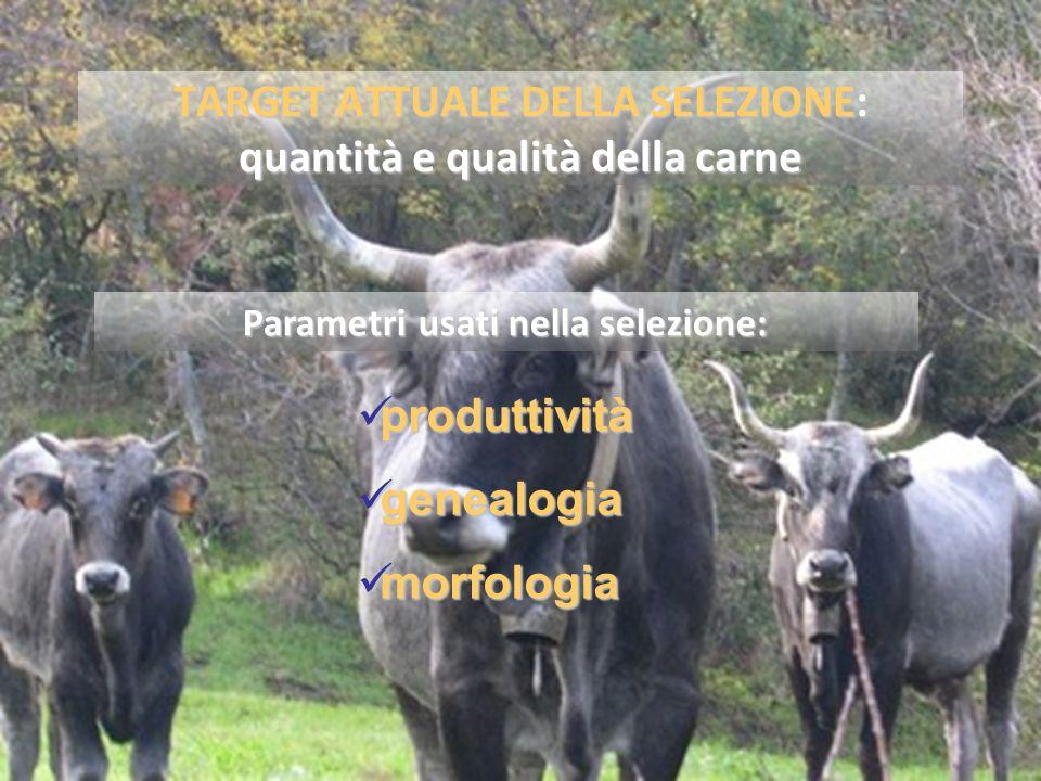 TARGET ATTUALE DELLA SELEZIONE: quantità e qualità della carne produttività produttività genealogia genealogia morfologia morfologia Parametri usati nella selezione: