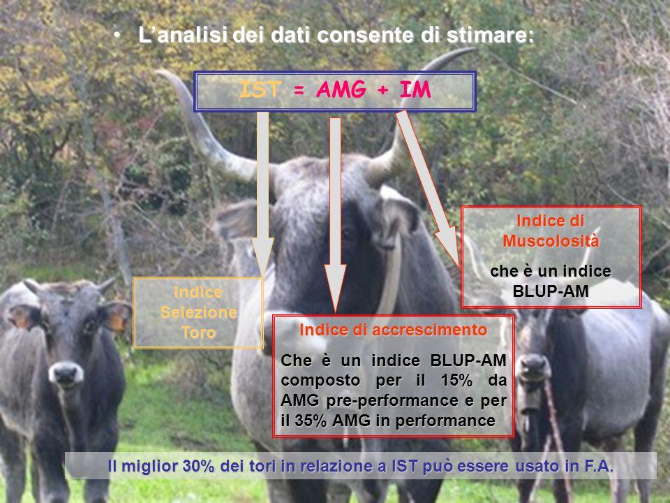 Lanalisi dei dati consente di stimare:Lanalisi dei dati consente di stimare: IST = AMG + IM Indice Selezione Toro Indice di accrescimento Che è un ind