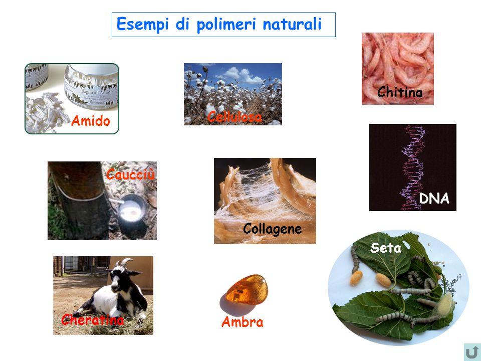 Esempi di polimeri naturali Amido Caucciù Cellulosa Ambra Chitina Cheratina Seta DNA Collagene