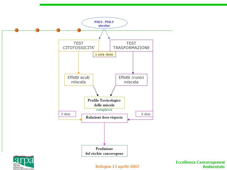 Eccellenza Cancerogenesi Ambientale Bologna 13 aprile 2007 TEST CITOTOSSICITA Effetti acuti miscela TEST TRASFORMAZIONE PM10 - PM2.5 ultrafini Effetti