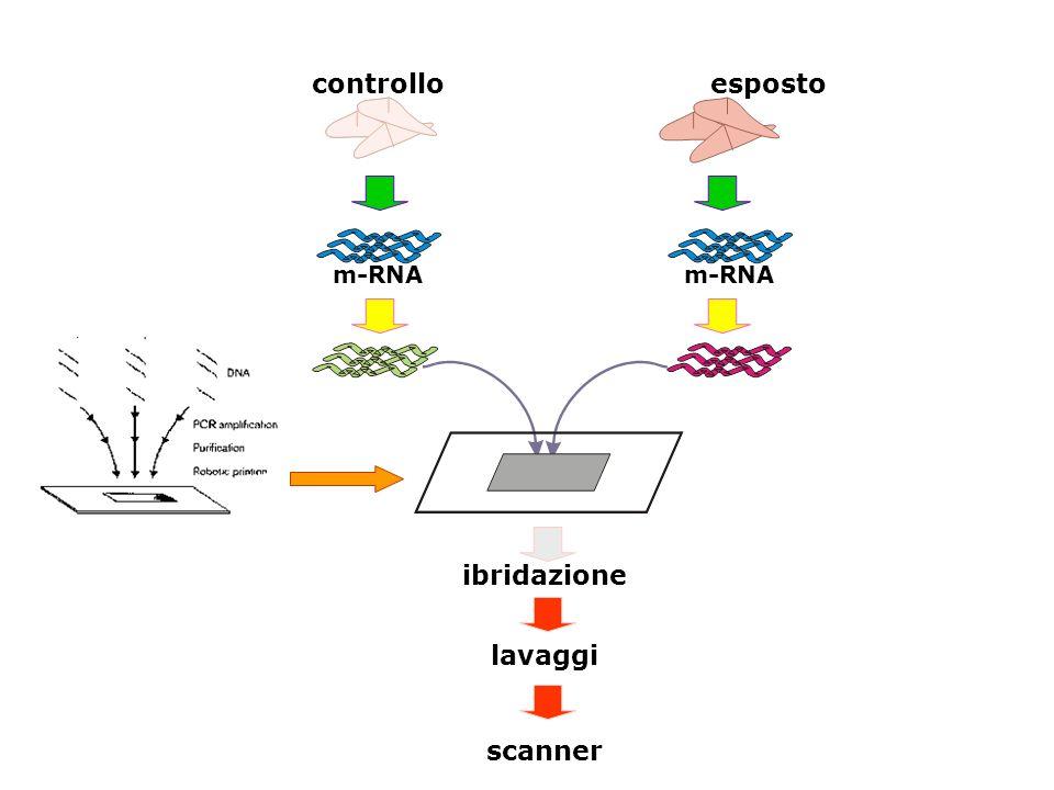 Eccellenza Cancerogenesi Ambientale Bologna 13 aprile 2007 controlloesposto m-RNA ibridazione lavaggi scanner