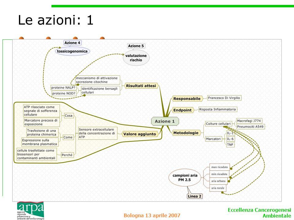 Eccellenza Cancerogenesi Ambientale Bologna 13 aprile 2007 Le azioni: 1