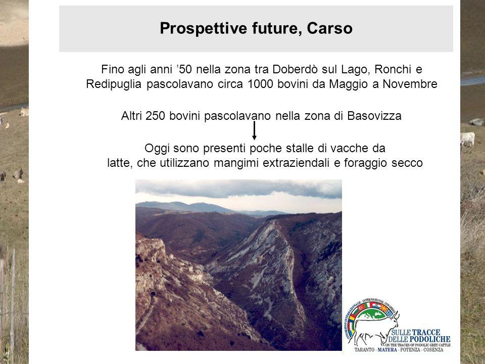 Prospettive future, Carso Fino agli anni 50 nella zona tra Doberdò sul Lago, Ronchi e Redipuglia pascolavano circa 1000 bovini da Maggio a Novembre Al
