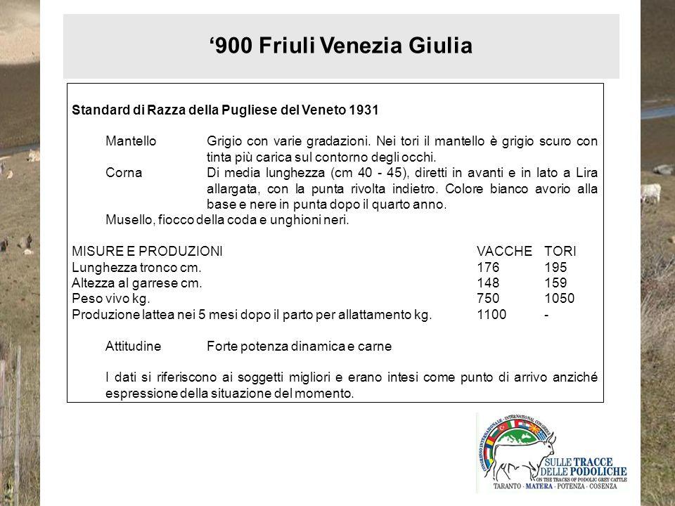 900 Friuli Venezia Giulia Standard di Razza della Pugliese del Veneto 1931 MantelloGrigio con varie gradazioni. Nei tori il mantello è grigio scuro co