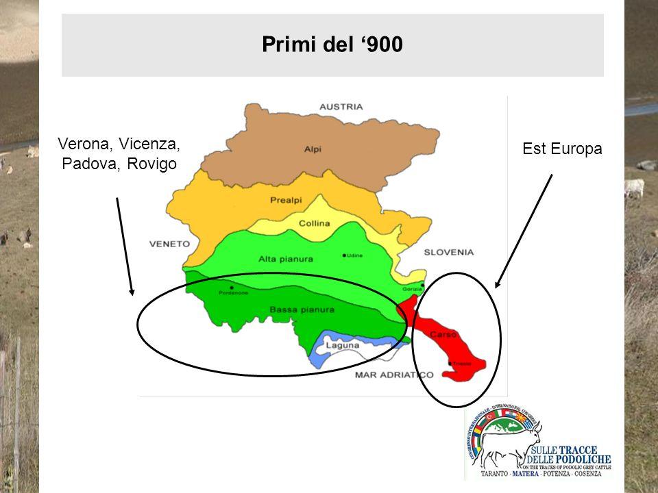 Verona, Vicenza, Padova, Rovigo Est Europa Primi del 900