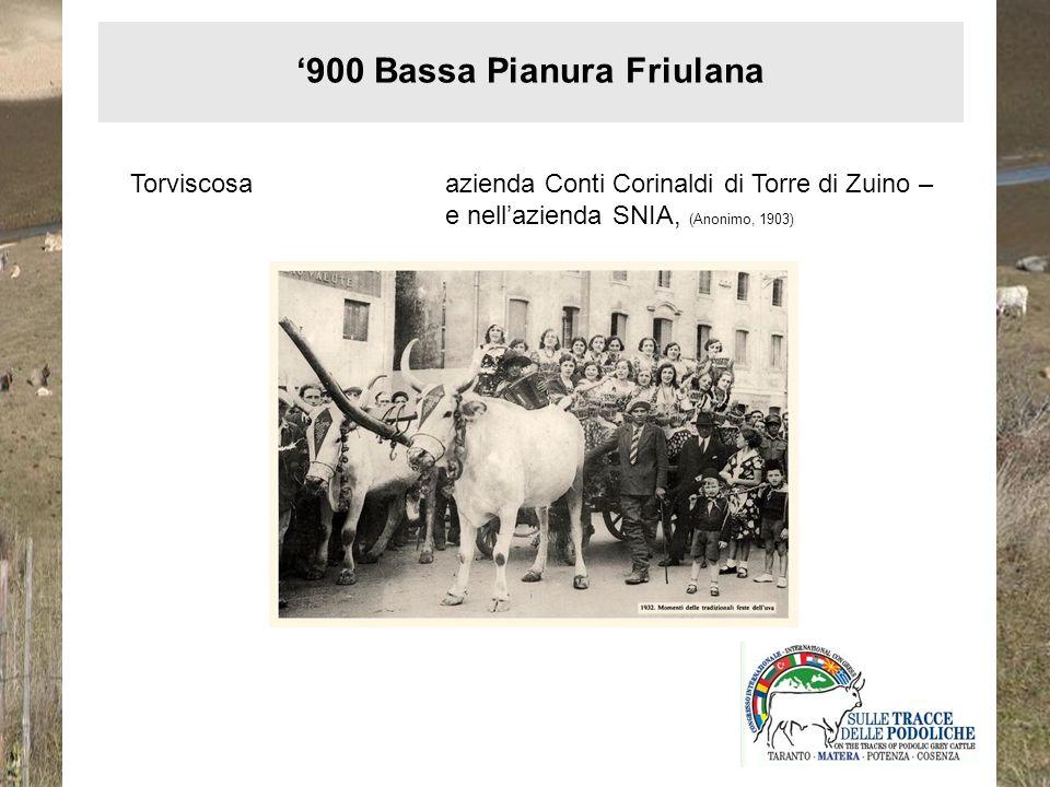 Aquileiaazienda Leo Economo di Ca Vescovo di Aquileia (Sansoni, 1942) Latisana e Lignanotenuta Valle Pantani-Lovato - … attualmente vengono allevati nella tenuta 222 capi bestiame così suddivisi: bovini da lavoro (Pugliese) e cavalli capi 80 … - (Minutello, 1934) 900 Bassa Pianura Friulana