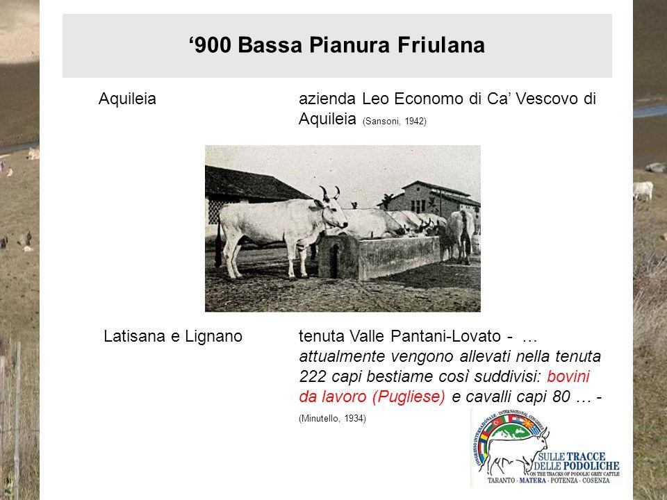 Aquileiaazienda Leo Economo di Ca Vescovo di Aquileia (Sansoni, 1942) Latisana e Lignanotenuta Valle Pantani-Lovato - … attualmente vengono allevati n