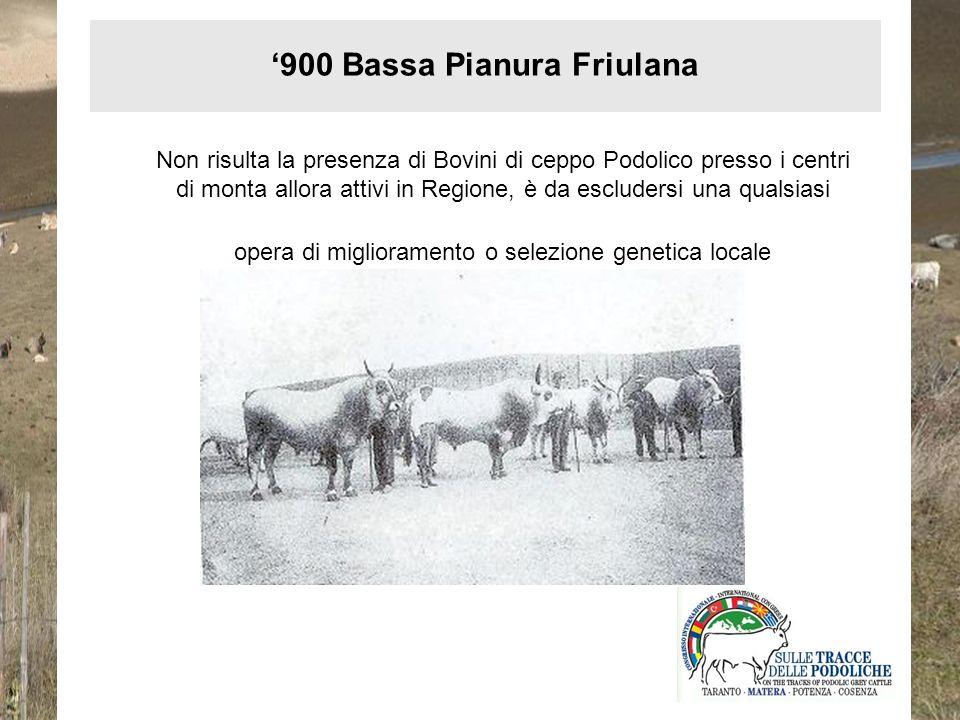Nei primi anni del 900 sono documentati tentativi di miglioramento dei bovini di ceppo Podolico locale con un toro di razza Romagnola (Arnerysch, 1900) 900 Carso