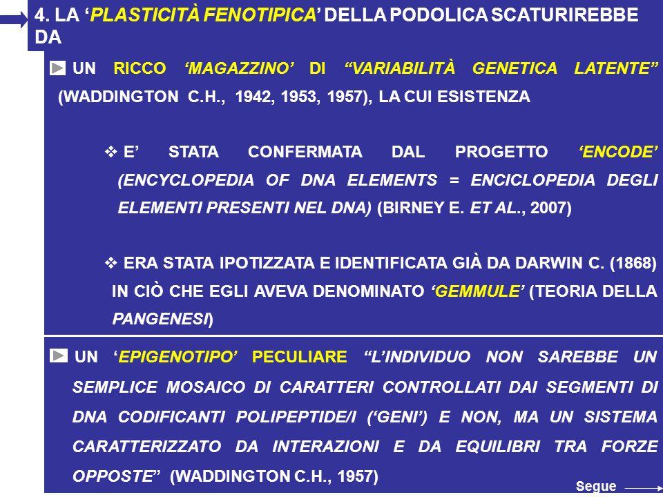 32 4. LA PLASTICITÀ FENOTIPICA DELLA PODOLICA SCATURIREBBE DA UN EPIGENOTIPO PECULIARE LINDIVIDUO NON SAREBBE UN SEMPLICE MOSAICO DI CARATTERI CONTROL