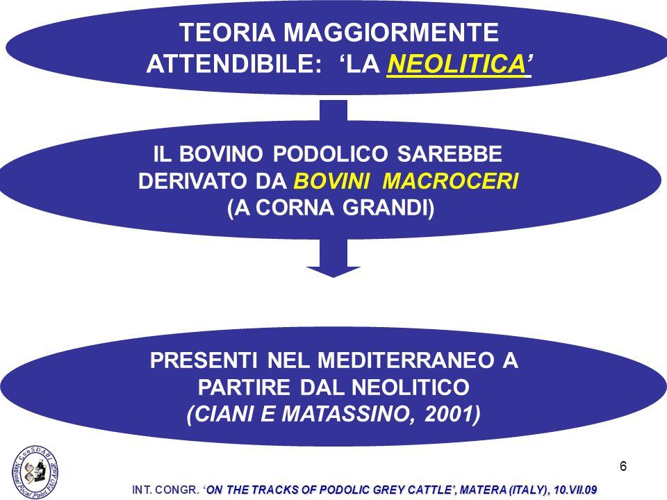 6 IL BOVINO PODOLICO SAREBBE DERIVATO DA BOVINI MACROCERI (A CORNA GRANDI) TEORIA MAGGIORMENTE ATTENDIBILE: LA NEOLITICA PRESENTI NEL MEDITERRANEO A P