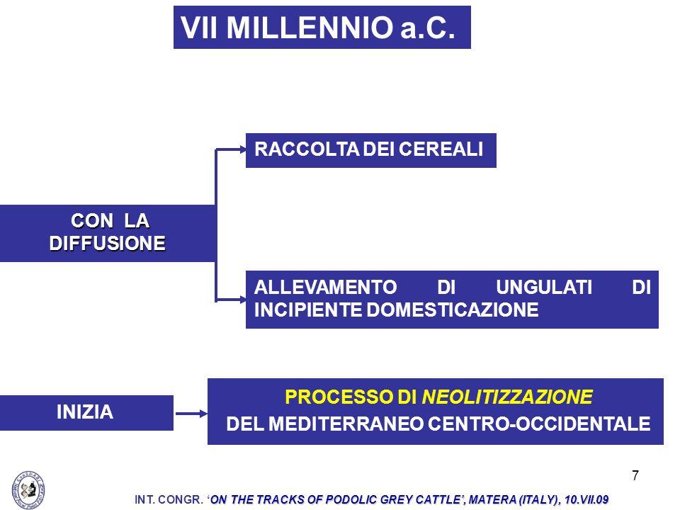 18 PRECELTICHE MILLENNI SUCCESSIVI (VASTO AREALE ITALIANO ED EUROPEO): ESISTONO NUMEROSE TESTIMONIANZE ARTISTICHE DELLA PRESENZA DI BOVINI CON GRANDI CORNA ALLEVATI DA POPOLAZIONI ANTROPICHE: CAMUNE NURAGICHE VILLANOVIANO-ETRUSCHE IBERICHE ON THE TRACKS OF PODOLIC GREY CATTLE, MATERA (ITALY), 10.VII.09 INT.