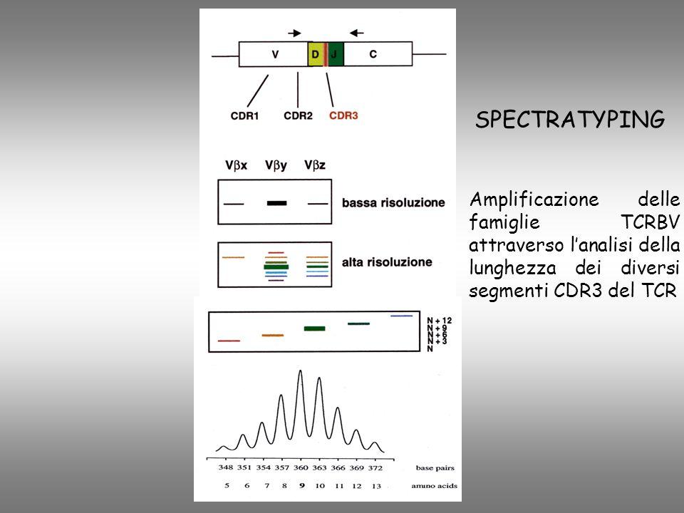 SPECTRATYPING Amplificazione delle famiglie TCRBV attraverso lanalisi della lunghezza dei diversi segmenti CDR3 del TCR