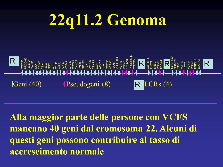 22q11.2 Genoma Alla maggior parte delle persone con VCFS mancano 40 geni dal cromosoma 22.