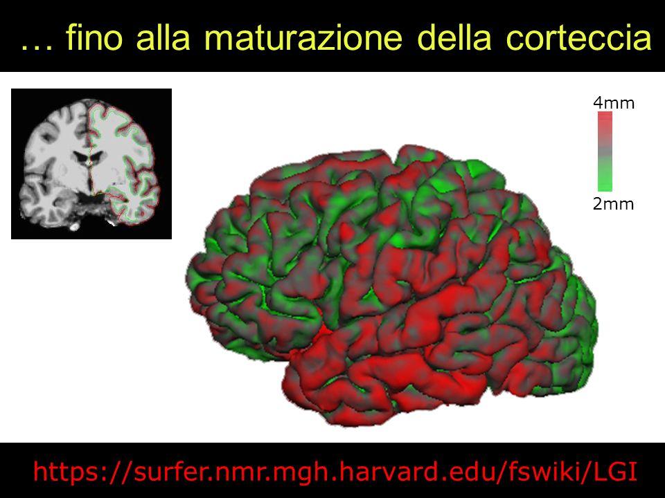 … fino alla maturazione della corteccia 2mm 4mm https://surfer.nmr.mgh.harvard.edu/fswiki/LGI