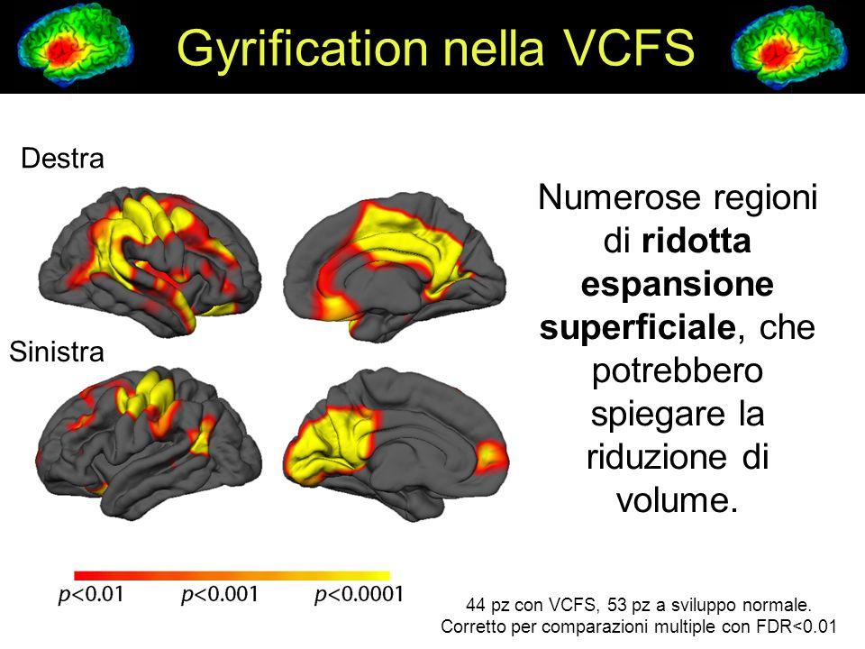 Gyrification nella VCFS Destra Sinistra Numerose regioni di ridotta espansione superficiale, che potrebbero spiegare la riduzione di volume. 44 pz con