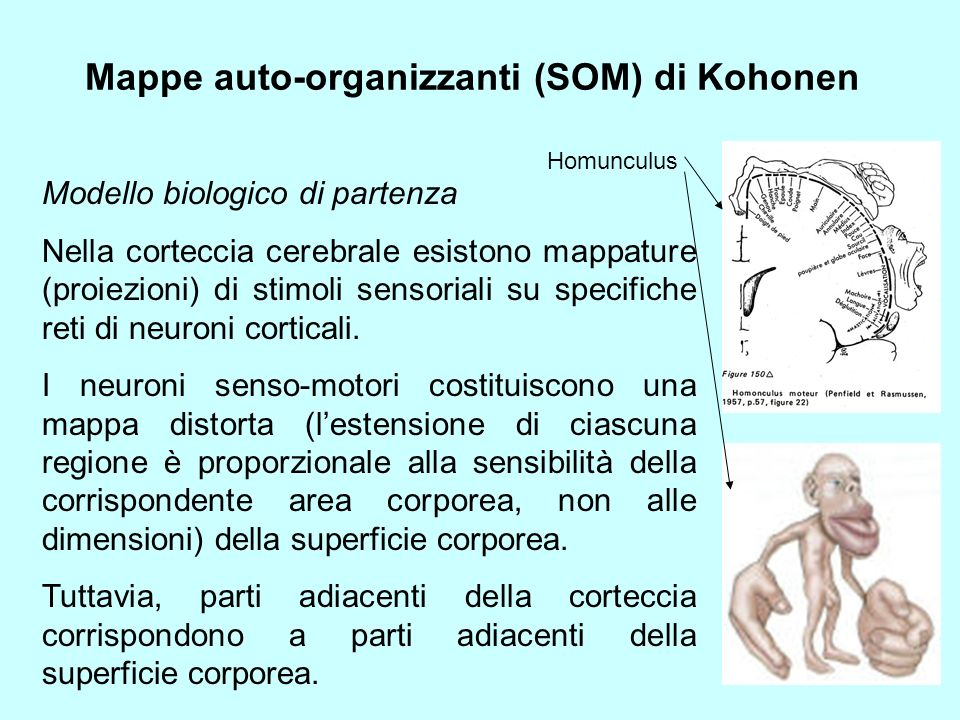 Mappe auto-organizzanti (SOM) di Kohonen Interazioni laterali fra neuroni eccitazione laterale a breve raggio (50-100 m) azione inibitoria (fino a 200-500 m) azione eccitatoria debole a lungo raggio (fino a qualche cm) approssimabili come: