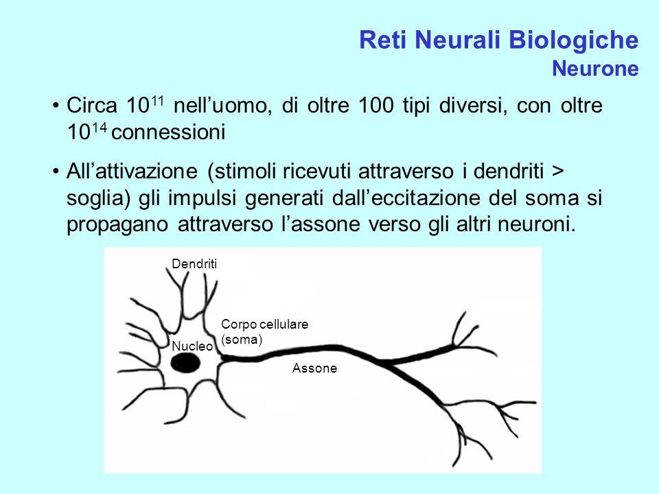 Reti Neurali Biologiche Neurone Circa 10 11 nelluomo, di oltre 100 tipi diversi, con oltre 10 14 connessioni Allattivazione (stimoli ricevuti attraver