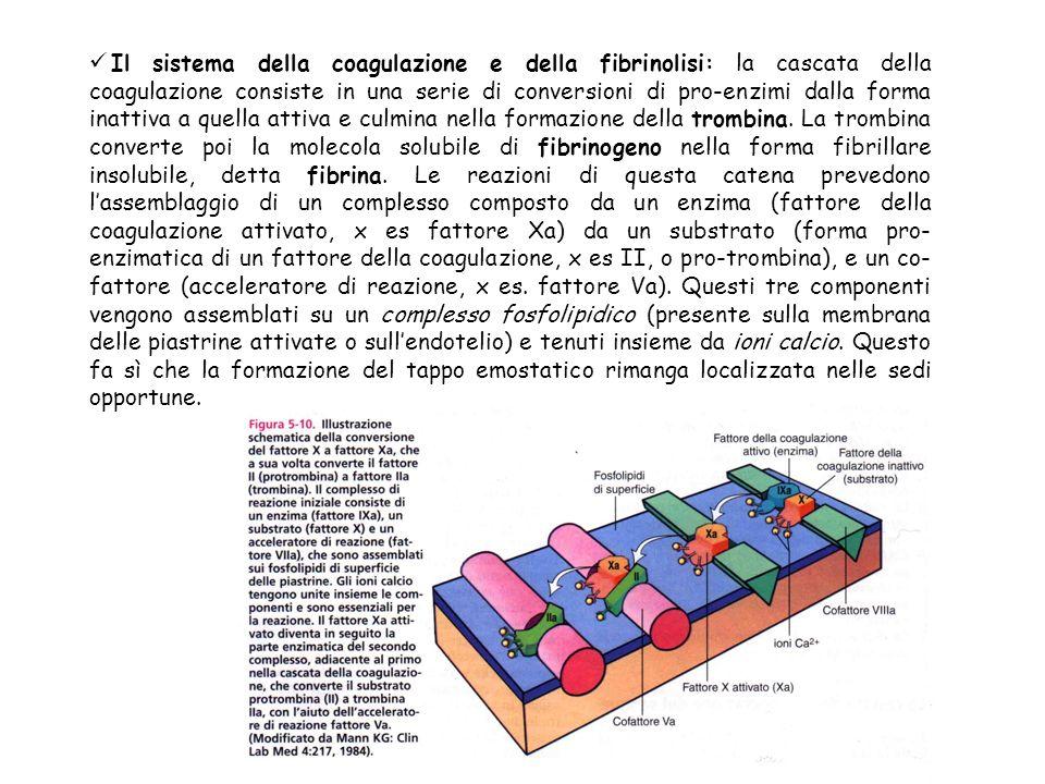 Il sistema della coagulazione e della fibrinolisi: la cascata della coagulazione consiste in una serie di conversioni di pro-enzimi dalla forma inatti