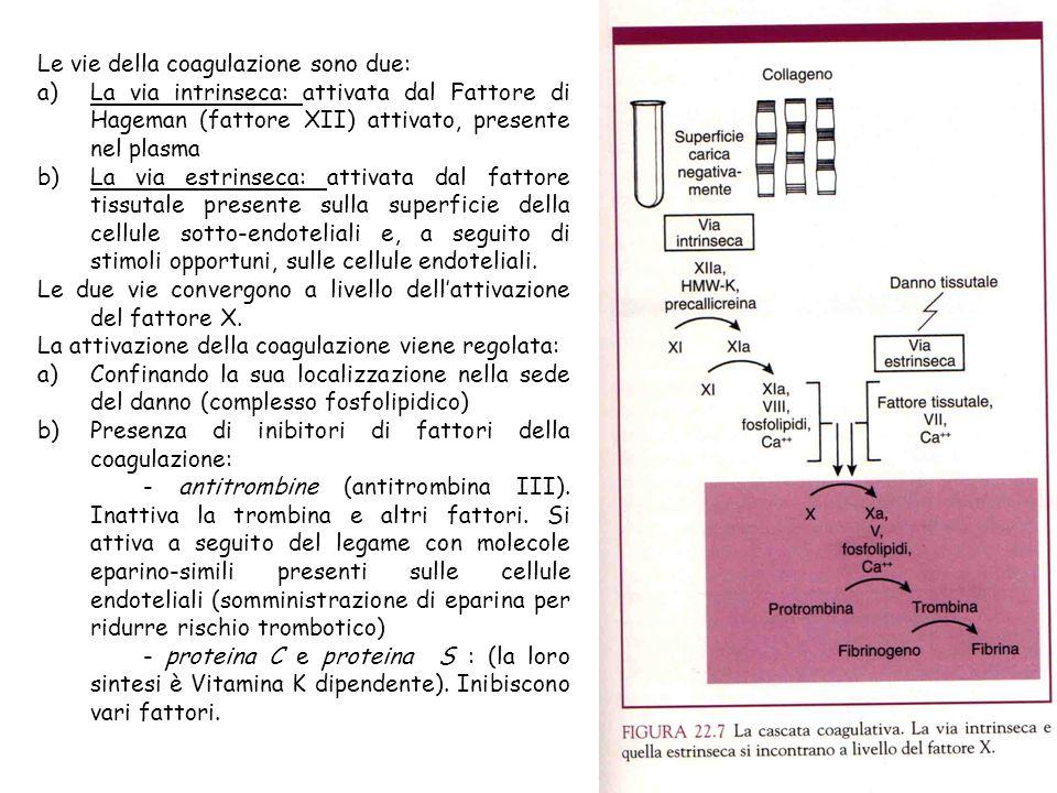 Le vie della coagulazione sono due: a)La via intrinseca: attivata dal Fattore di Hageman (fattore XII) attivato, presente nel plasma b)La via estrinse