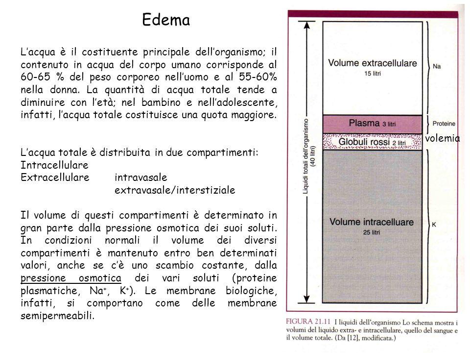 Emostasi normale Lemostasi viene controllata principalmente da: La parete dei vasi (cellule endoteliali): in condizioni normali lendotelio possiede proprietà anti-piastriniche, anticoagulanti e fibrinolitiche ma, dopo attivazione, anche pro-coagulanti.