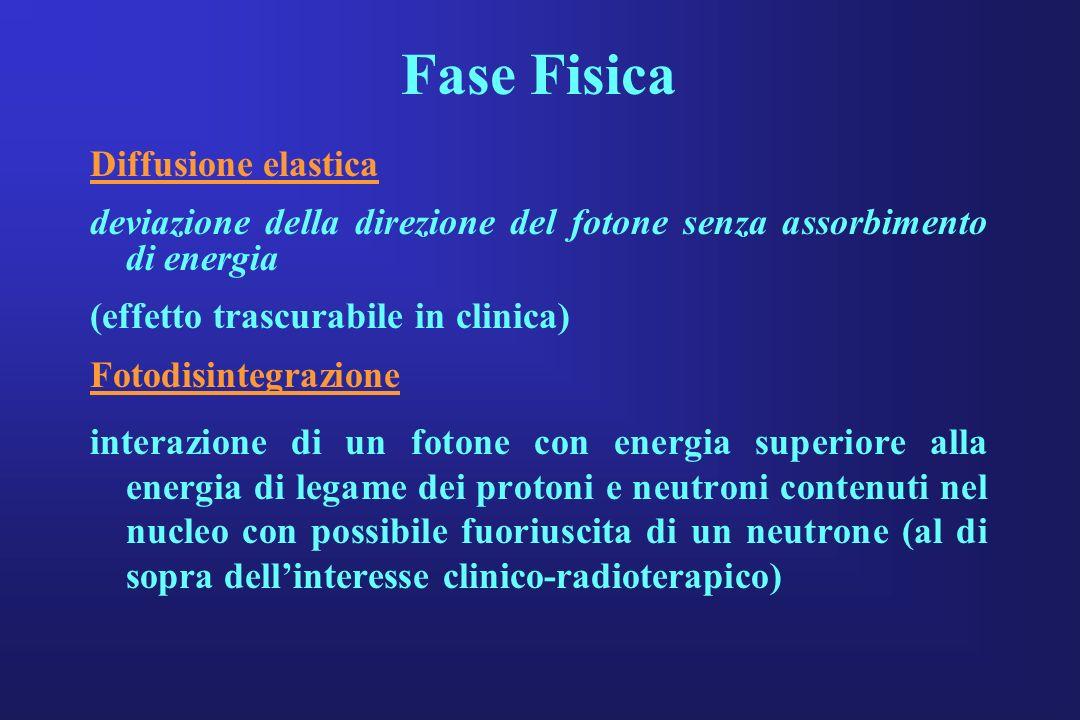 Fase Fisica Diffusione elastica deviazione della direzione del fotone senza assorbimento di energia (effetto trascurabile in clinica) Fotodisintegrazi