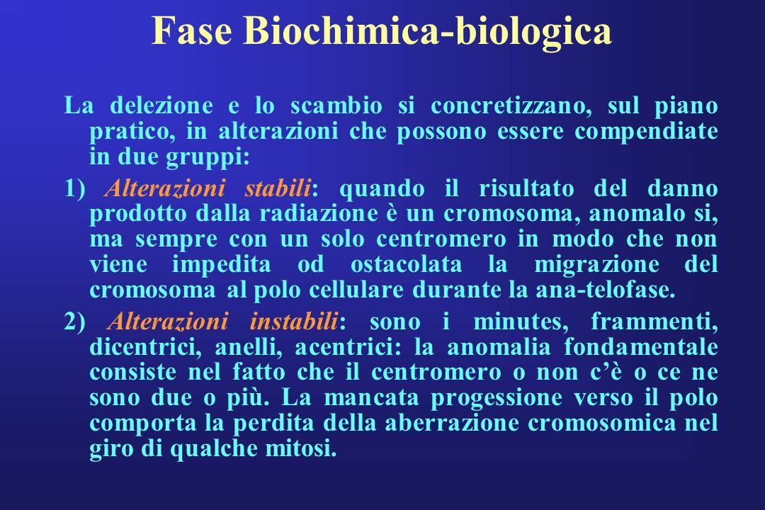 Fase Biochimica-biologica La delezione e lo scambio si concretizzano, sul piano pratico, in alterazioni che possono essere compendiate in due gruppi: