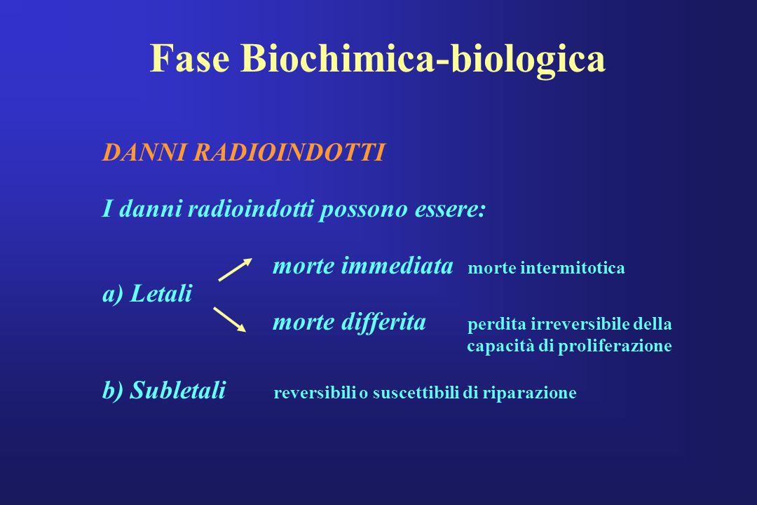 Fase Biochimica-biologica DANNI RADIOINDOTTI I danni radioindotti possono essere: morte immediata morte intermitotica a) Letali morte differita perdit