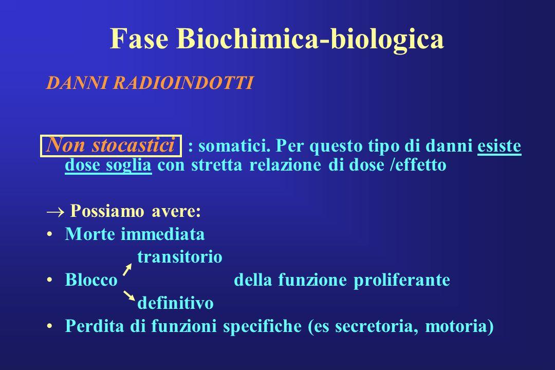 Fase Biochimica-biologica DANNI RADIOINDOTTI Non stocastici : somatici. Per questo tipo di danni esiste dose soglia con stretta relazione di dose /eff