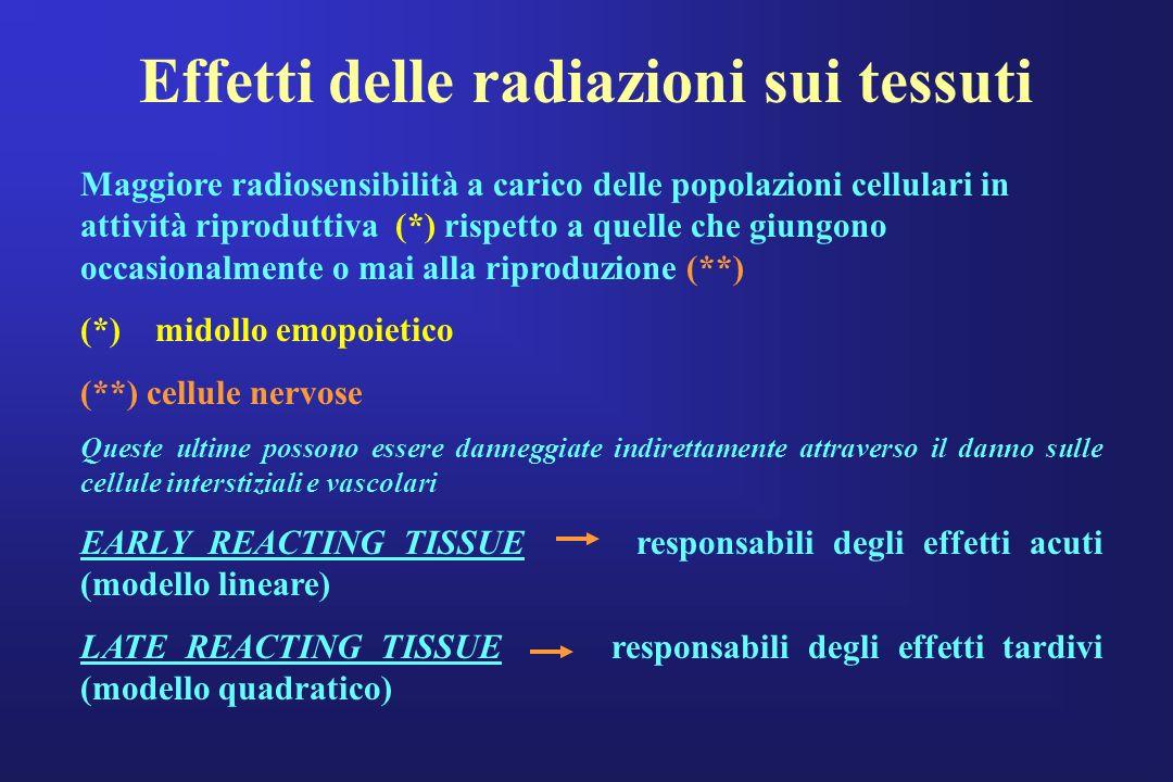 Effetti delle radiazioni sui tessuti Maggiore radiosensibilità a carico delle popolazioni cellulari in attività riproduttiva (*) rispetto a quelle che