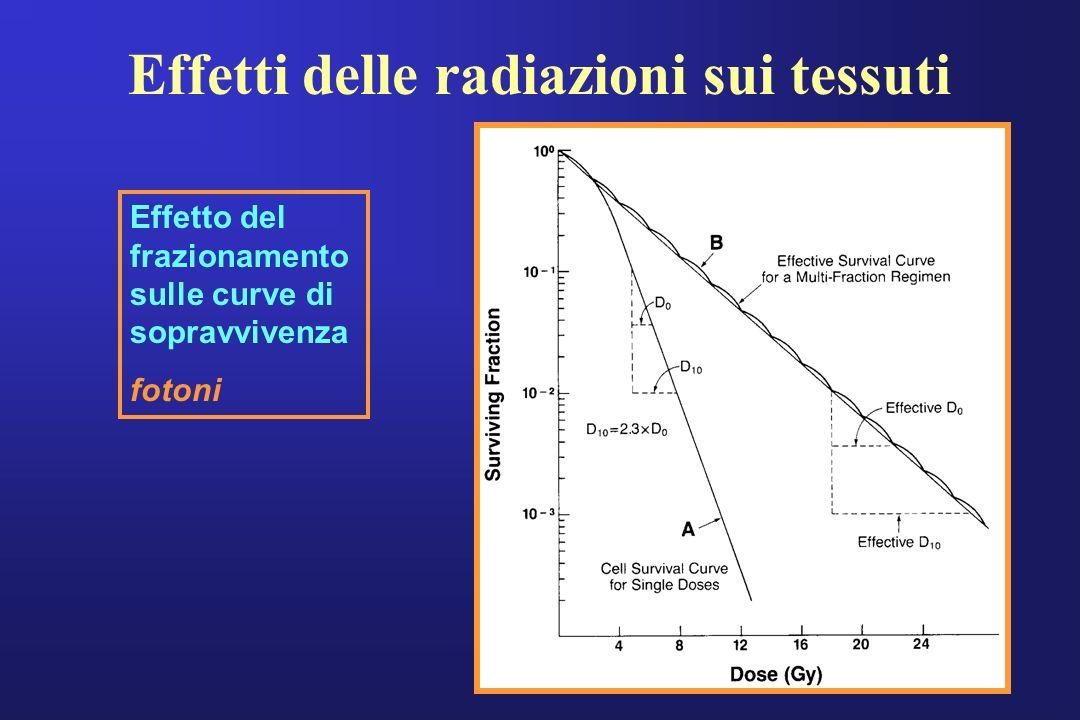 Effetti delle radiazioni sui tessuti Effetto del frazionamento sulle curve di sopravvivenza fotoni