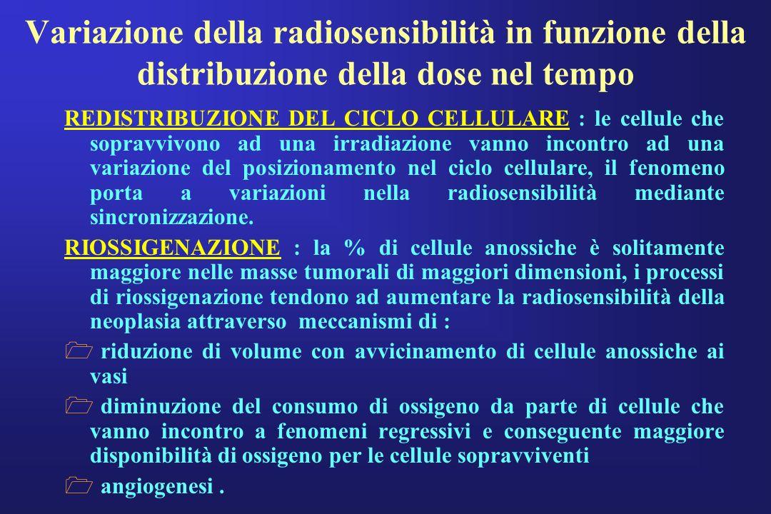 REDISTRIBUZIONE DEL CICLO CELLULARE : le cellule che sopravvivono ad una irradiazione vanno incontro ad una variazione del posizionamento nel ciclo ce